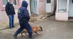 Percheziții domiciliare pe raza municipiului Botoșani și a comunei Curtești