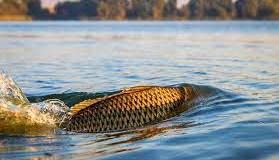 Pescuitul e în prohibiţie generală!
